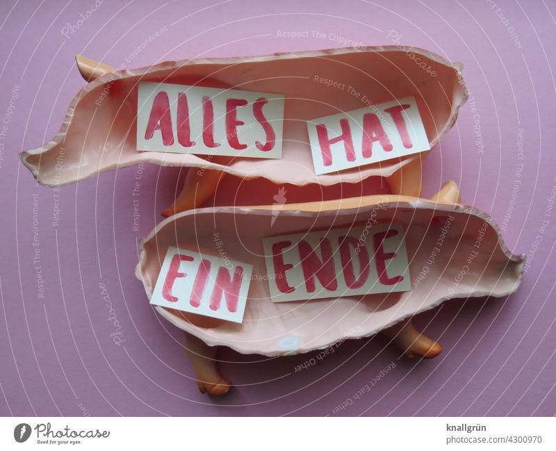 Alles hat ein Ende Leben Lebensmittel Fleisch Ernährung Gesunde Ernährung Tierschutz Bioprodukte Fleischindustrie Massentierhaltung Foodfotografie Schwein