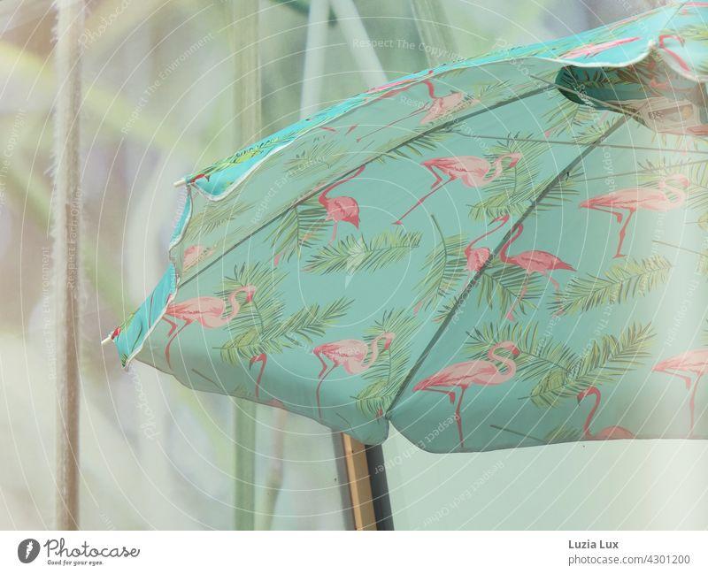 Rosafarbene Flamingos auf türkis, ein Sonnenschirm und helles Licht Sonnenschein Sonnenlicht schön pink rosa Sommer luftig Tag grün Schönes Wetter Wärme
