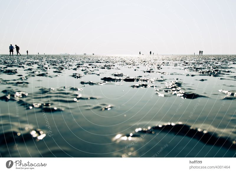 Personen bei auflaufendem Wasser im Watt Wattenmeer Wattwanderung ebbe und flut Flut auflaufendes Wasser Nordseeküste glizernd seichtes Wasser Seichtwasser nass