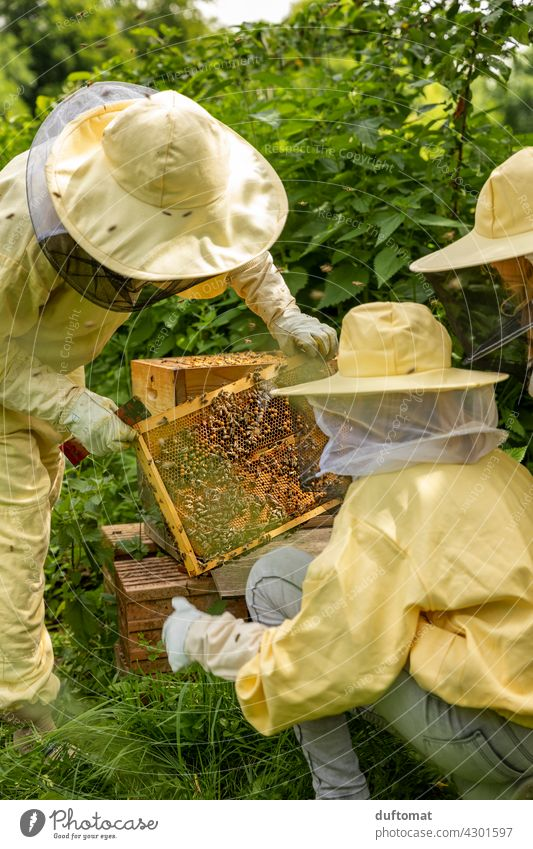 Schulung am offenen Bienenstock, Menschen in Imkeranzug Natur natürlich Insekt Insekten Tier Paar Schutzanzug tiere Tiere in der Wildnis Pollen befühlen