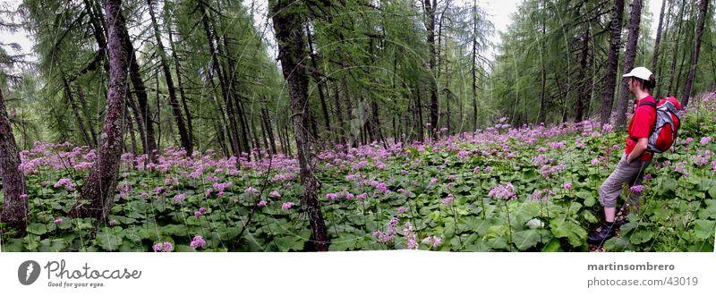 ... Männlein im Walde ... Mann Baum Blume Wald Berge u. Gebirge Wege & Pfade wandern Freizeit & Hobby Pflanze