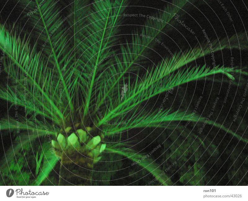 palm Palme Palmenwedel grün dunkel Baumstamm Beleuchtung