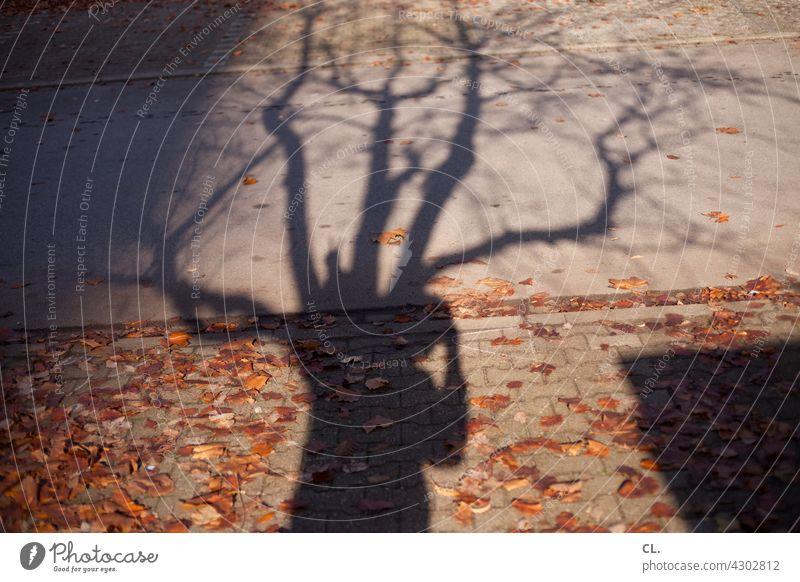 fotograf im baum Schatten Schattenspiel Baum Äste und Zweige Herbst Blätter herbstlich Person Fotografieren Wege & Pfade