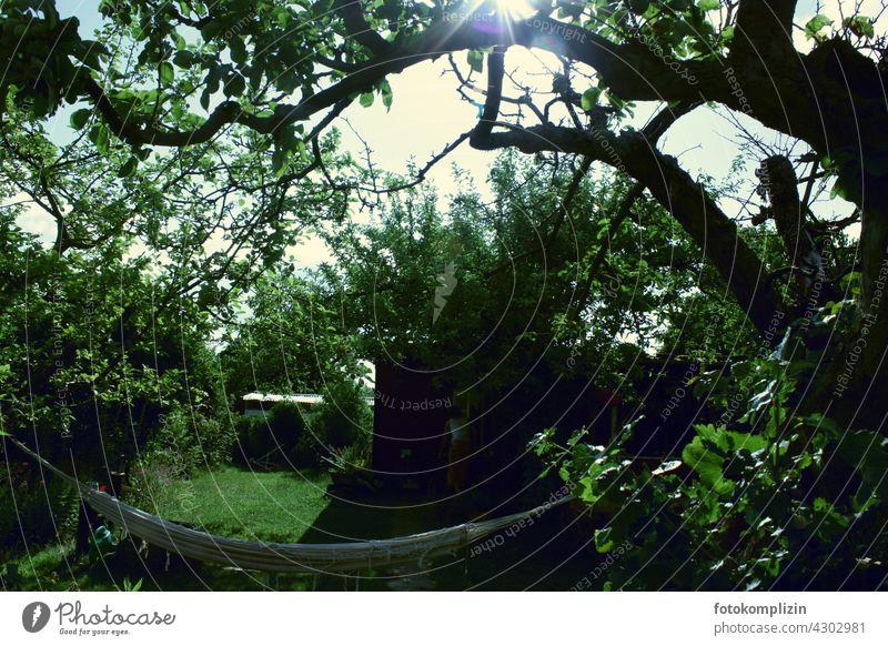 dunkelgrüne Gartenoase mit Hängematte Baum Idylle Oase Entspannung Auszeit Erholung Sommer Ruhe chillen entspannung Sommerzeit Gartenlaube Ast Urlaub zuhause