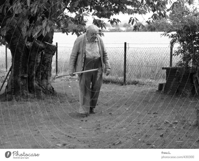 im Garten Mensch Mann alt Sommer Baum Leben Liebe Senior Arbeit & Erwerbstätigkeit maskulin Feld dreckig Zufriedenheit 60 und älter Brille