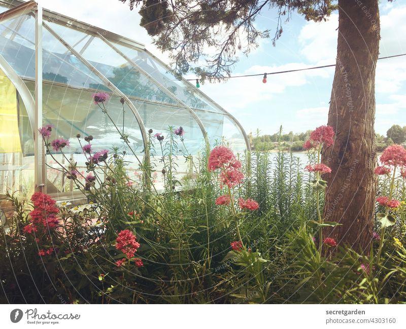fröhlicher Wildwuchs am Treibhaus Gewächshaus Blumen Baum Natur Treibhauseffekt Pflanze Farbfoto Außenaufnahme Menschenleer Garten natürlich Blühend Sommer