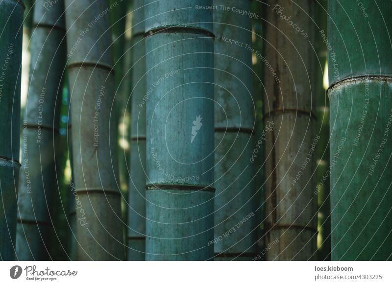 Nahaufnahme von Bambusstämmen im mystischen Wald von Arashiyama in Kyoto, Japan Baum Garten abstrakt Zen Spa Muster Textur Natur Blatt grün Asien natürlich