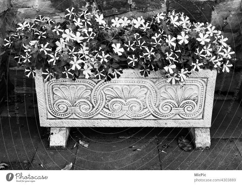 Blumen im Kasten schwarzweiss verschönerung Straßenrand Menschenleer Dekoration & Verzierung Blumenkasten Ornament Kübel Schwarzweißfoto Außenaufnahme