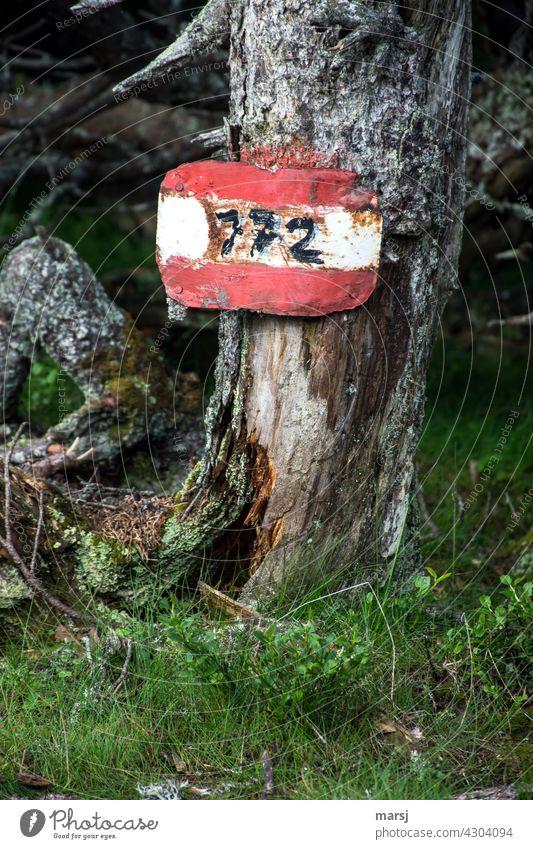 Alte Wanderwegmarkierung an noch älterem, toten Baum. Rot-Weiß-Rot und Nummer 772 Wegnummer Hinweisschild Wanderzeichen Wegweisend Borke alt rauh Wegweiser