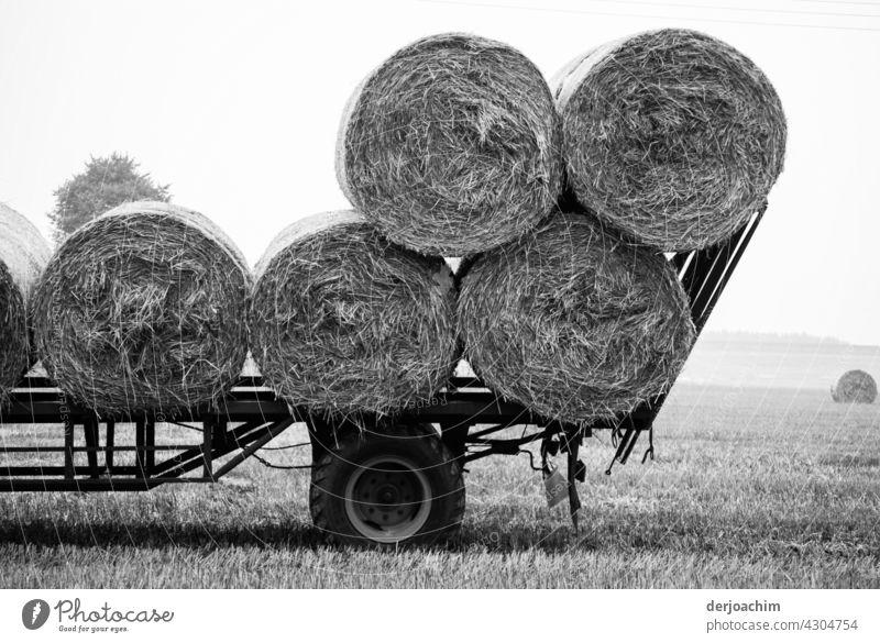 Erntezeit. Ein paar Strohballen  sind schon auf den Wagen geladen. Das Feld ist abgeerntet.  . Landwirtschaft Himmel Herbst Heuballen Landschaft Außenaufnahme