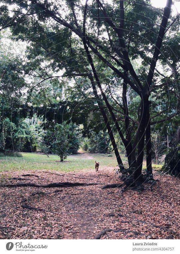 Spaziergang im Park laufen Baum Baumrinde alter Baum Natur Wald Außenaufnahme grün tropisch Baumstamm Pflanze Umwelt Wachstum Licht Farbfoto Tag Tag mit Hunden