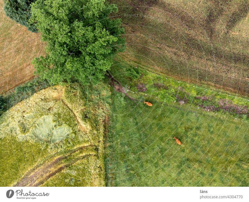 kleinteilige Landschaft von oben Luftaufnahme landwirtschaftlich Wiese Feld Galloway Strukturen & Formen Baum grün Linien Ackerland Landwirtschaft Gras Umwelt