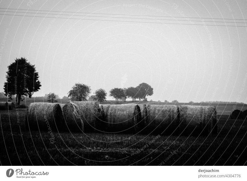 Das Getreide ist verladen bereit. Mehrere Ballen liegen neben aneinander.Im Hintergrund ist eine Baumgruppe.  In SW. Sommer Natur Ernte Weizen Landwirtschaft