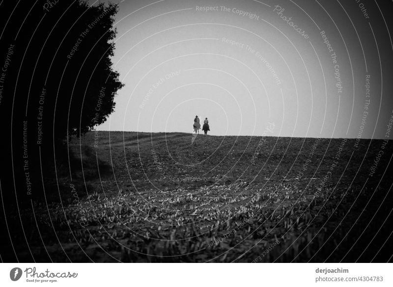 Auf dem Rücken der Pferde.....Zwei einsame Reiter auf weiter Flur, im Herbst auf abgeernteten Feldern , Reiten links an einem Wald vorbei.Der Hintergrund ist hell.