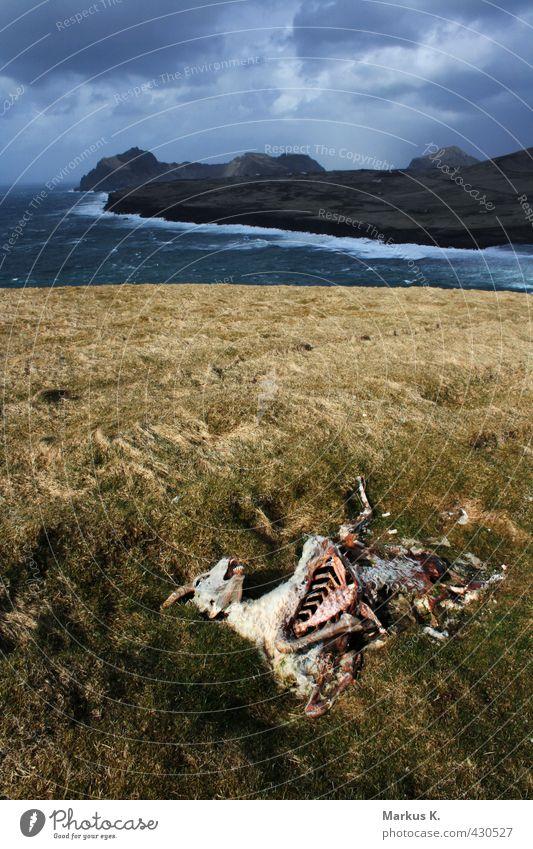 Heimaey Himmel Wasser Meer Landschaft Wolken Tier Ferne Tod Gras Felsen Wetter Regen Wind Insel Vergänglichkeit Hügel