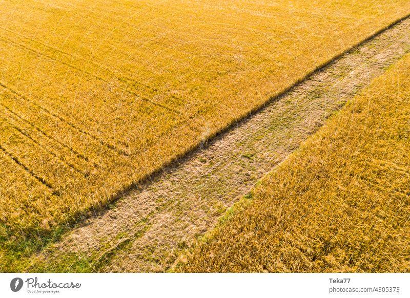 Der Acker acker Landwirtschaft landwirt weizen weizenfeld weizenfelder Ackerbau ackerland gelb