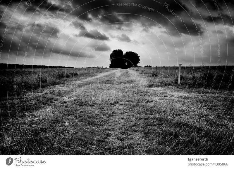 Feldweg Wolken bewölkt bewölkter himmel bewölktes Wetter Menschenleer Landschaft Außenaufnahme Emsland Wiese bedrückend bedrohlich Einsamkeit einsamer weg