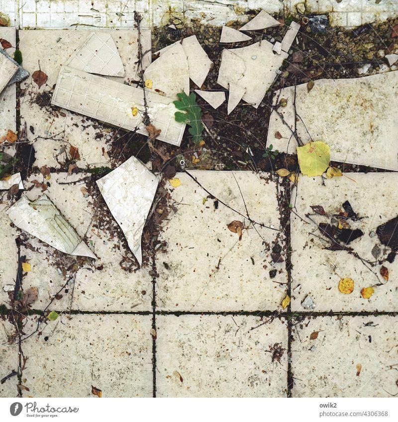 Zerfall Fliesen u. Kacheln Fußboden Fugen Viereck gekreuzt Farbfoto kaputt eckig alt abstrakt Verfall Strukturen & Formen Linien Menschenleer Totale Pflanze