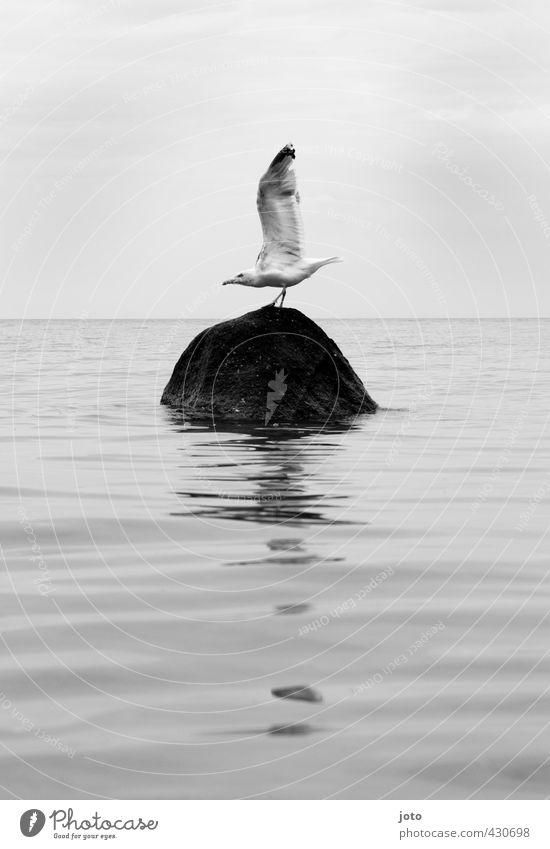 fels ohne brandung Natur Meer Einsamkeit ruhig Leben Freiheit Stein Felsen Horizont Vogel Kraft wild elegant frei Energie ästhetisch