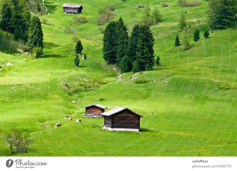Öhis Hütte Umwelt Natur Landschaft Pflanze Baum Gras Grünpflanze Wiese Wald Hügel Alpen Haus authentisch Kitsch Klischee grün Alm Bergwiese Almwirtschaft