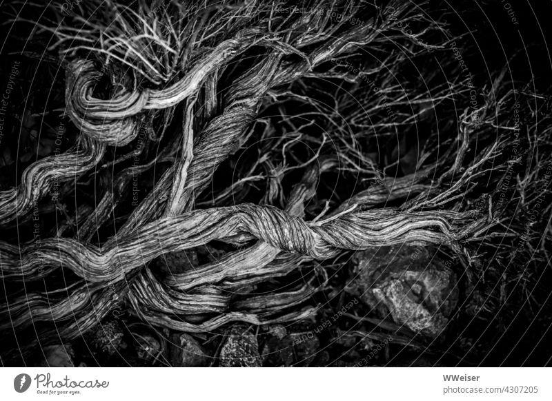 Tote Äste, bizarr verdreht und stark verzweigt, liegen auf großen Steinen vor dunklem Hintergrund Zweige Holz Totholz Baum Busch Gebüsch Pflanze Flora Insel