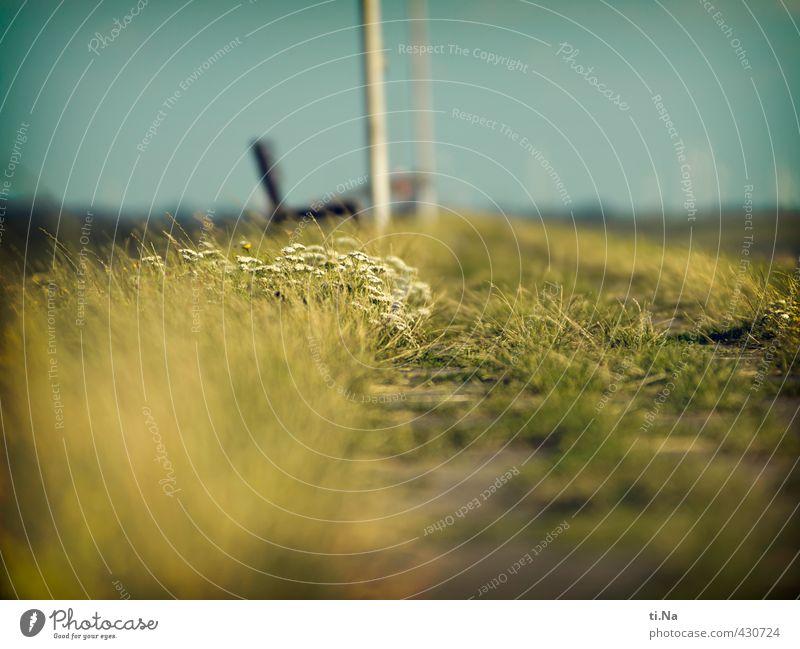 Sommer auf dem Deich Landschaft Pflanze Blume Gras Sträucher Blüte Grünpflanze Küste Nordsee Deutschland Schleswig-Holstein Dithmarschen Blühend Duft klein