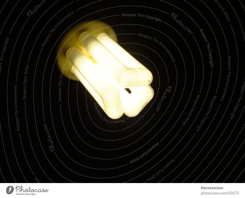HalogenBirne1 Lampe Häusliches Leben