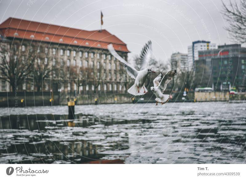 Zwei Möwen im Winter über der Spree Vogel kalt Außenaufnahme Farbfoto Menschenleer Wasser Tag Tier Tiergruppe Textfreiraum oben Tierporträt Möwenvögel Umwelt