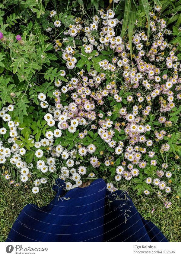 Bild von Frau stehend in Blumen Frauen Kleid Sommer unkenntlich Natur Gras im Freien Frühling grün Hintergrund Garten kleiner Abschnitt Pflanze Haufen Stehen