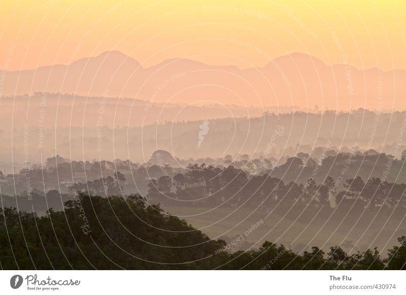 Goldene Zeiten brechen an Ferien & Urlaub & Reisen schön Sommer Sonne Baum Erholung Ferne Wald Berge u. Gebirge Freiheit Stimmung orange träumen Tourismus wandern gold