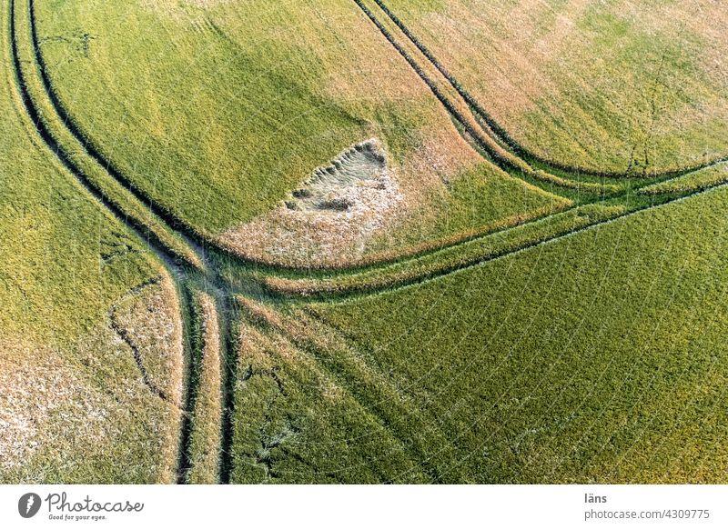 Getreidefeld von oben Landwirtschaft Nutzpflanze Sommer Ackerbau Menschenleer Ernährung Wachstum Linien Außenaufnahme Kornfeld Feld Lebensmittel Landschaft