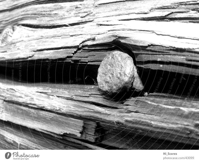 Nagel in Baumstumpf Natur Holz Baumstamm Baumrinde