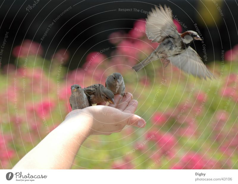 Lieber ein Spatz in der Hand... Hand Tier Zusammensein Vogel füttern Spatz