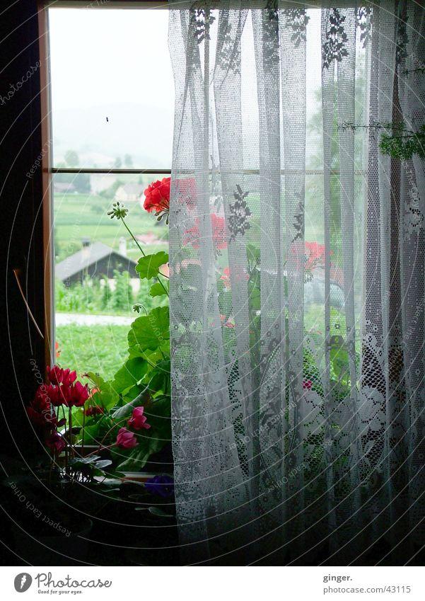 Der Ausblick Blume Fenster alt dunkel hell Gardine Fensterblick einfach Menschenleer Fensterplatz Kontrast