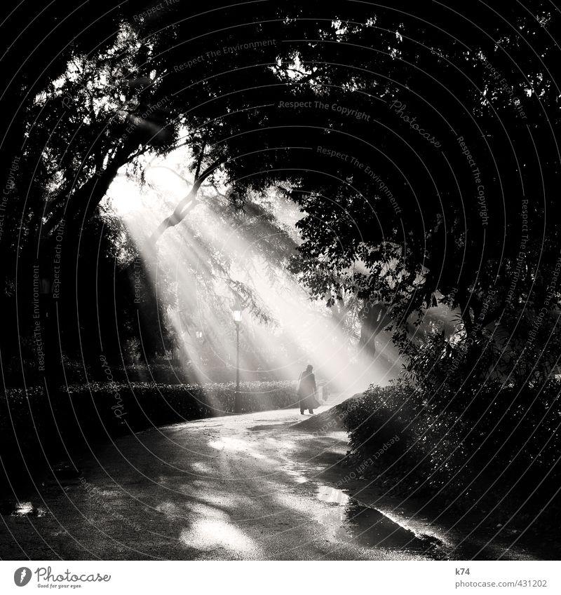 Erleuchtung im Park Mensch Senior Nebel Baum Wege & Pfade gehen leuchten Hoffnung Ziel Schwarzweißfoto Außenaufnahme Morgen Licht Schatten Kontrast Silhouette