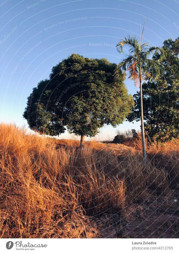 Morgenlicht Sonnenaufgang Bäume Baum Palme Außenaufnahme Farbfoto Landschaft im Freien Saison Umwelt Hintergrund Ansicht Licht schön grün Natur natürlich