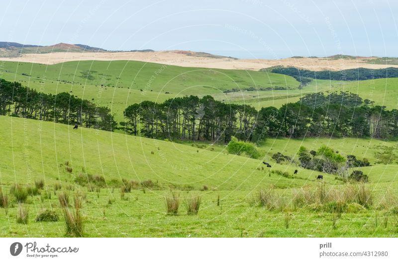 Te Werahi Strand in Neuseeland Düne Sanddüne Küste MEER Meer Rasen Wiese Gras Landschaft Baum Buchse Vegetation Ackerbau Weidenutzung Viehbestand Landwirtschaft
