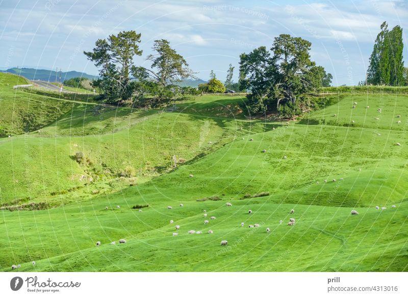 Region Waikato in Neuseeland matamata waikato Nordinsel Ackerland Weide Wiese idyllisch friedlich Hügel Auenland Landwirtschaftsfläche bukolisch ländlich