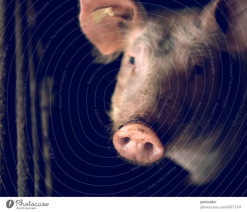 tier | blickkontakt Einsamkeit Tier dunkel Traurigkeit Glück rosa Hoffnung Zeichen Neugier Landwirtschaft Vertrauen Fernweh Haustier Nutztier friedlich Schwein