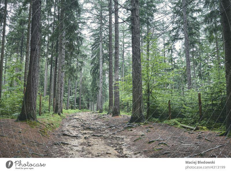 Regentag im Wald des Riesengebirges, Polen. Natur Berge u. Gebirge Landschaft Nebel Wetter im Freien Baum grün dunkel Wildnis reisen Europa