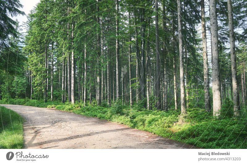 Pfad im Wald des Riesengebirges, Polen. Natur Berge u. Gebirge Landschaft im Freien Baum grün Wildnis reisen Europa Weg Wälder