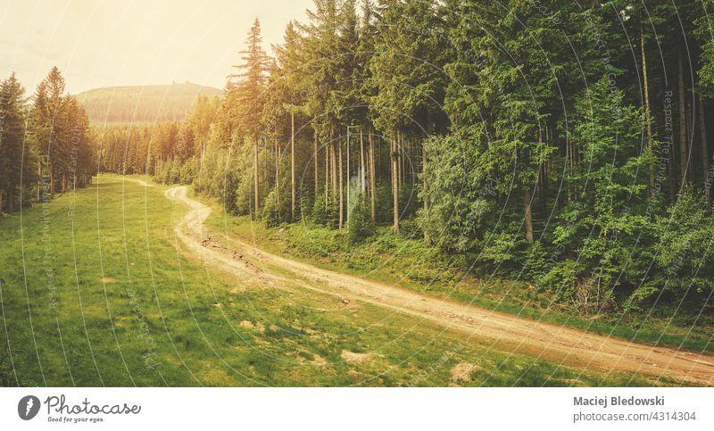 Pfad im Riesengebirge, angewandte Farbtonung, Polen. Natur Wald Berge u. Gebirge Landschaft Weg Fernweh im Freien Baum grün Wildnis reisen Europa Wälder
