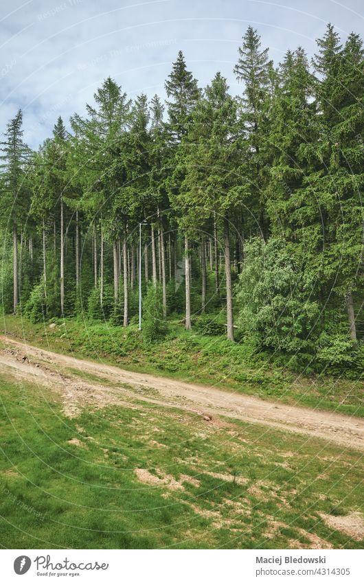 Pfad im Riesengebirge, Polen. Natur Wald Berge u. Gebirge Landschaft Weg Fernweh im Freien Baum grün Wildnis reisen Europa Wälder Berghang Hügel