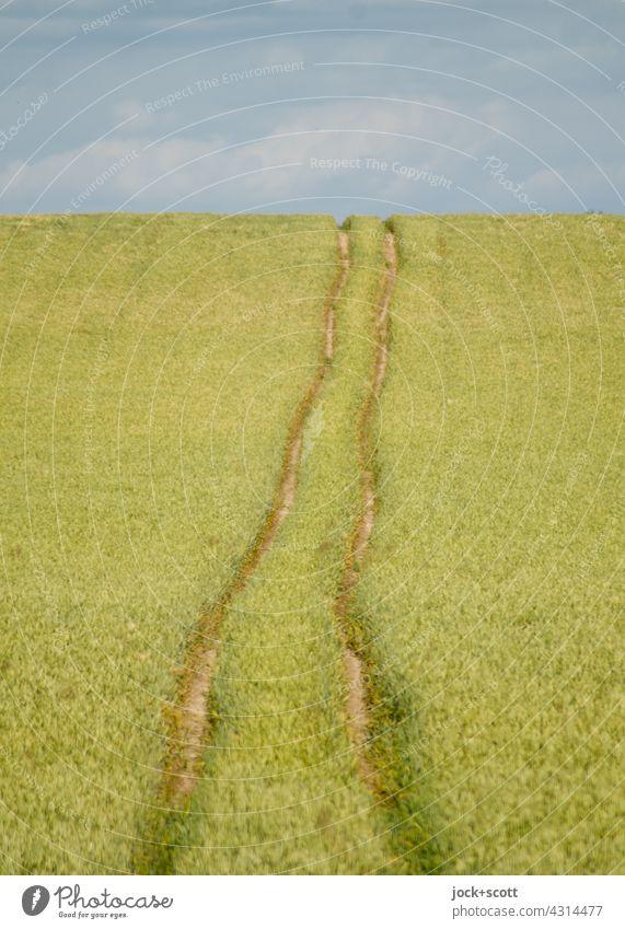 lange Spuren im Getreidefeld Landschaft Wolken Himmel Weizenfeld Sommer Spurrinne authentisch Wärme Symmetrie Wege & Pfade Panorama (Aussicht) ökologisch