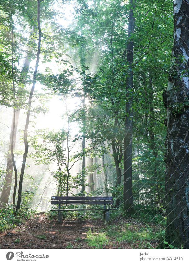 sonnenplatz Sonne Sonnenstrahlen Licht Wald Bank Ruhe Natur Baum Sonnenlicht Außenaufnahme Gegenlicht Menschenleer Schönes Wetter Tag grün Lichterscheinung