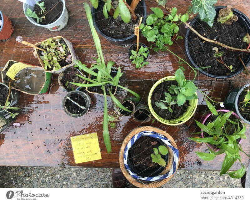 ökologische Tauschgeschäfte Pflanze Sprössling Wachstum Tisch Tauschtisch Farbfoto Natur grün Außenaufnahme Menschenleer nass regnerisch Frühling Umwelt Garten