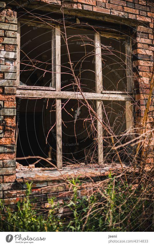 Lost Land Love | Zerbrochenes Fenster in einem zerbrochenen Haus zerbrechlich Fensterscheibe zerbrochenes glas zerbrochene Fenster lost places lostplace