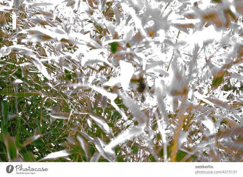 Bambus, unrettbar fehlbelichtet blatt blätter bambus busch natur dschungel wald grün unscharf garten Pflanze Baum tropisch natürlich Hintergrund exotisch