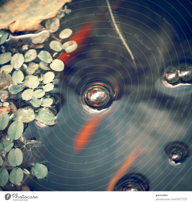 teichmandala Natur Urelemente Wasser Sommer Pflanze Wasserpflanze Teich Tier Fisch 3 ästhetisch Flüssigkeit glänzend kalt feminin blau grün rot Wasserblase