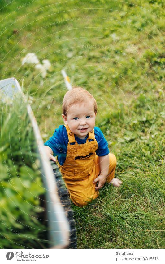 Kind sitzt auf dem Gras neben einem Gartenwagen und lächelt Sommer Kleinkind bezaubernd Schubkarre Baby sitzen klein Karre Sommerzeit im Freien auf Gras sitzend